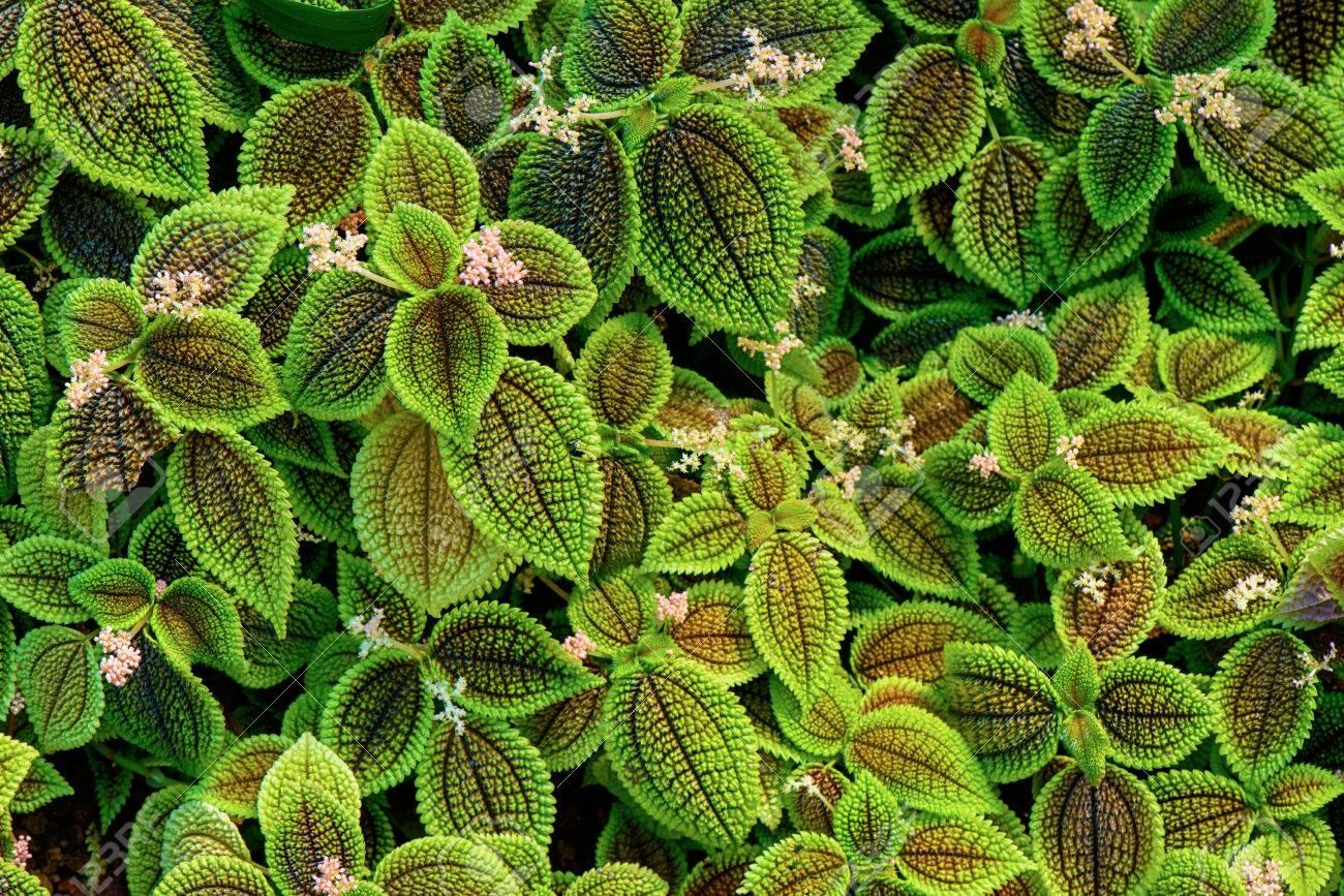 Tropical plant - 81794608
