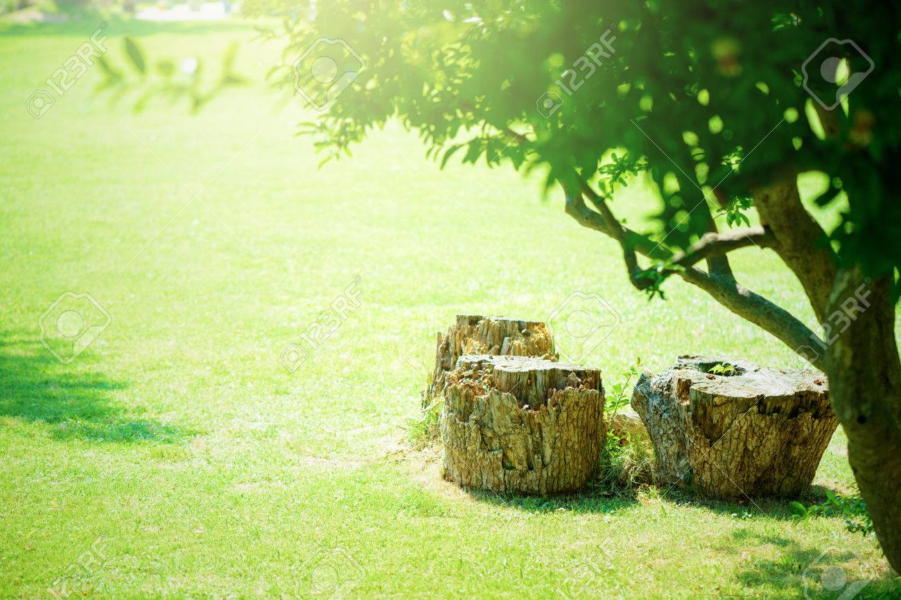 Lawn and stump - 81867171