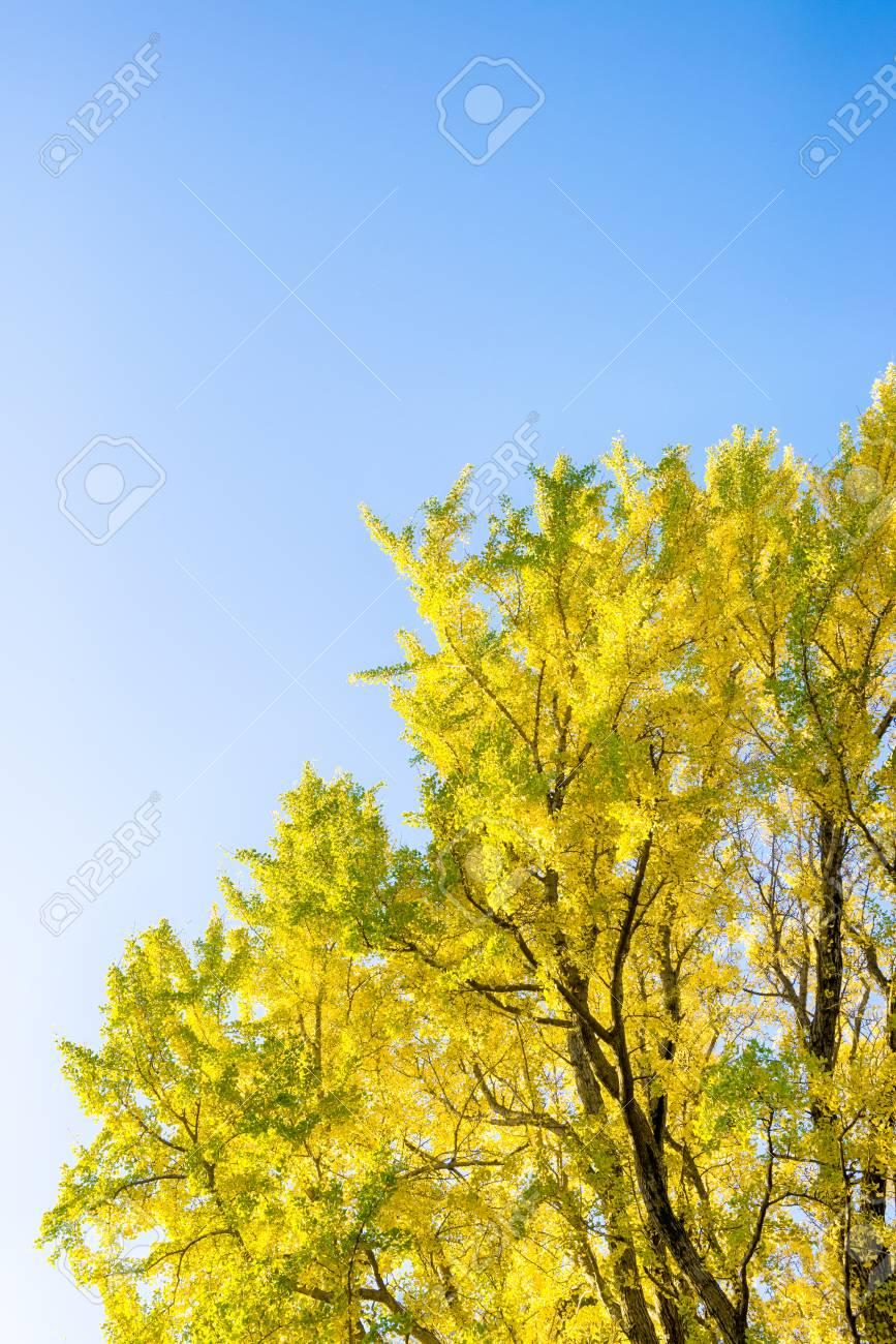 Season of autumn leaves. - 83765623