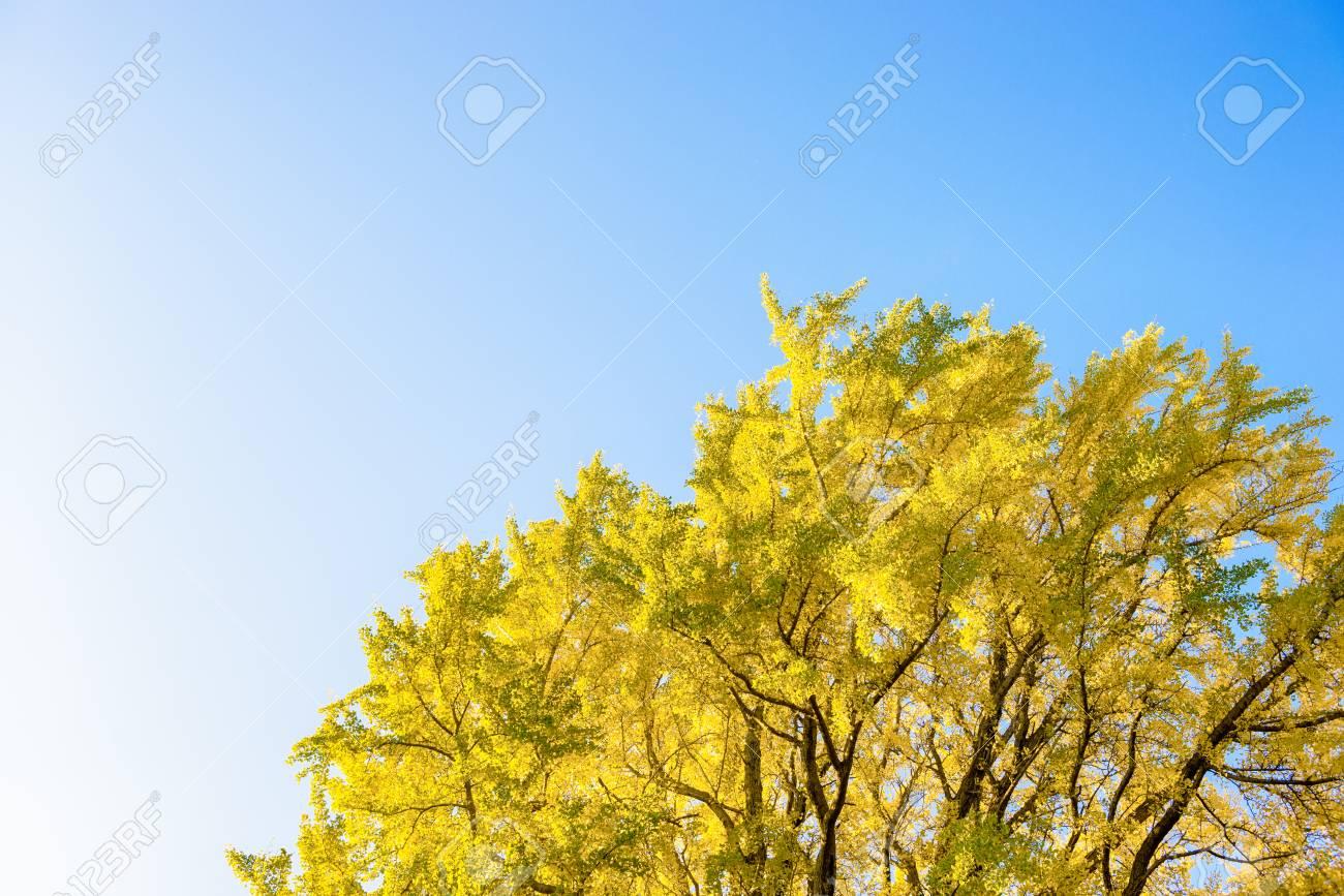 Season of autumn leaves. - 82422110