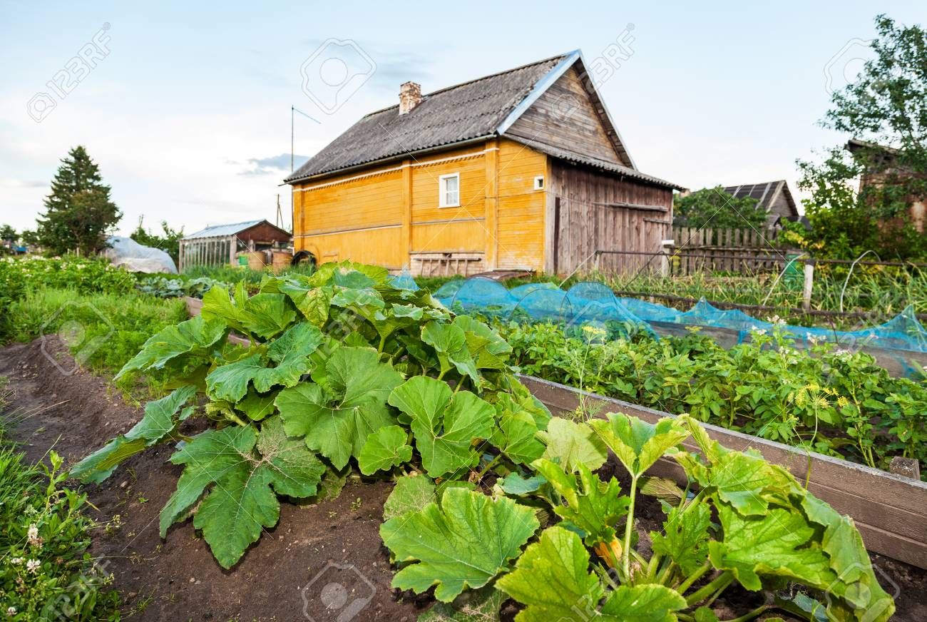 Rural Landscape With Small Wooden House And Vegetable Garden Stock Photo Picture And Royalty Free Image Image 71165638
