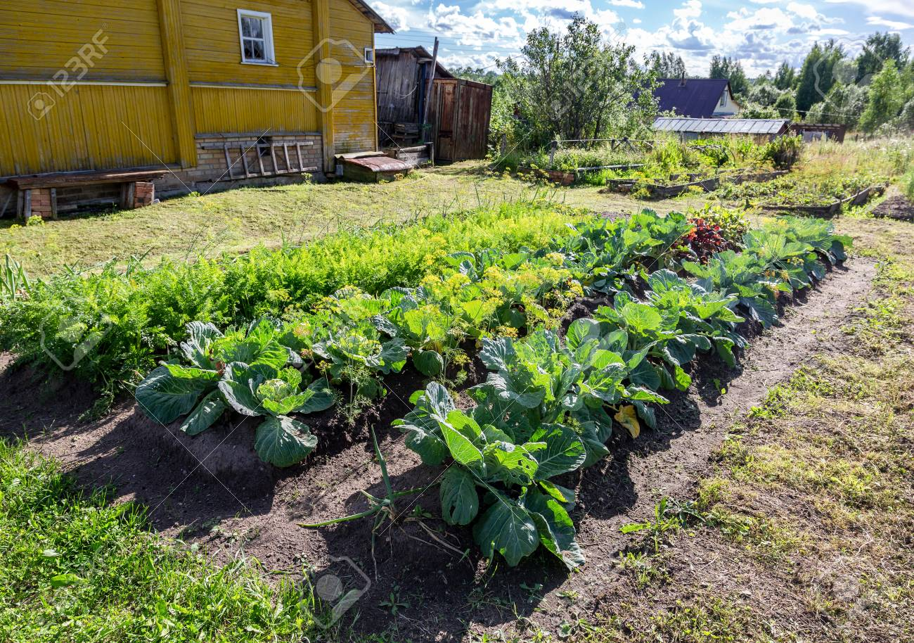 Rural Landscape With Small Wooden House And Vegetable Garden Stock Photo Picture And Royalty Free Image Image 108447268