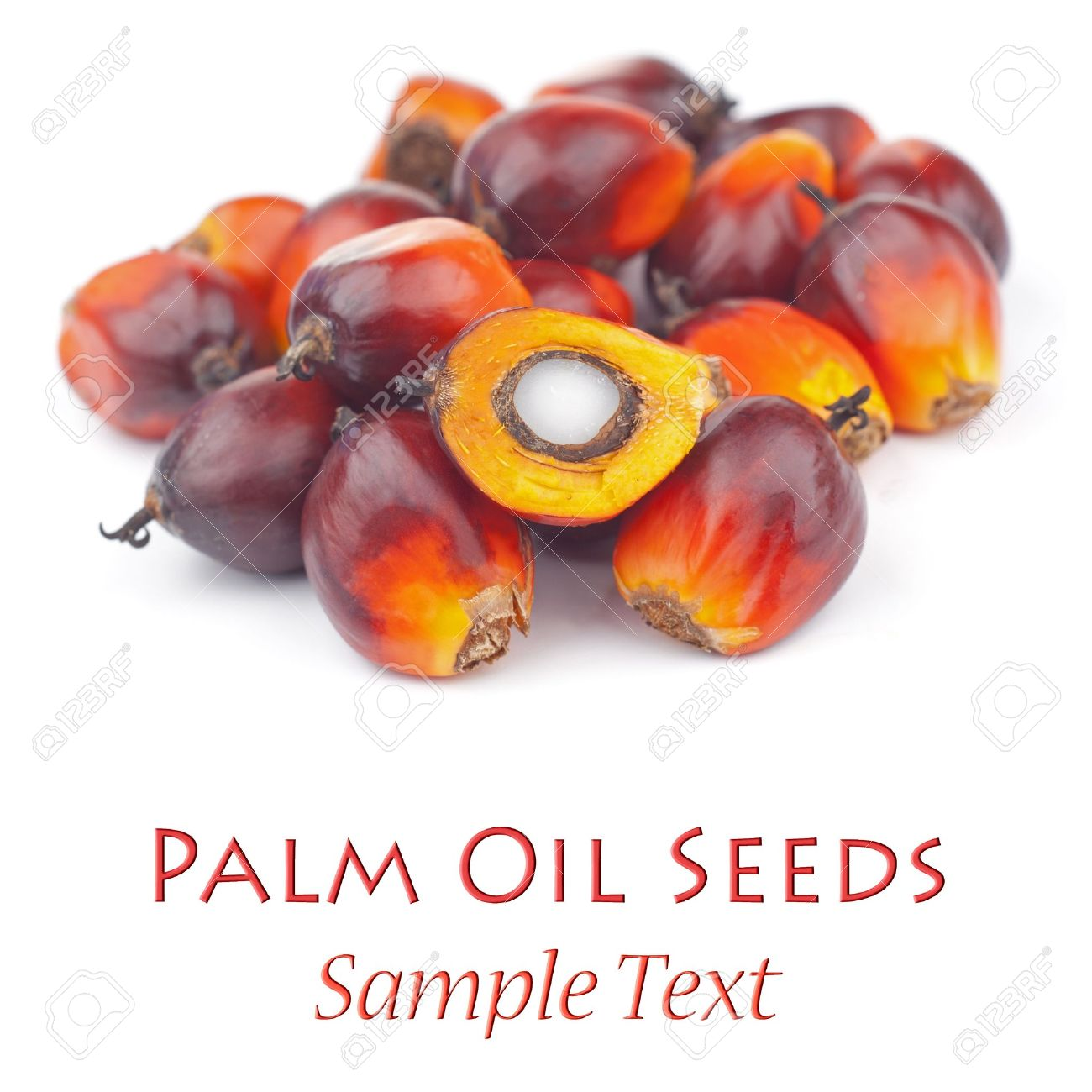 Oil Palm Seeds Stock Photo - 14554085