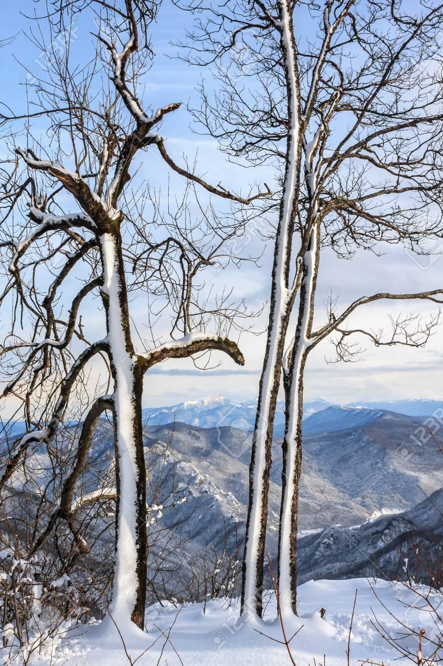 Hiver Foret De Montagne Enneigee Paysage Vertical Banque D Images Et