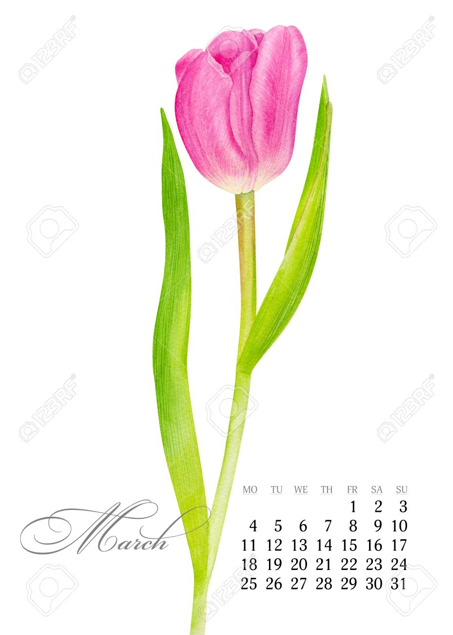 photograph relating to Tulip Printable titled Classy printable calendar 2019. March. Watercolor red Tulip