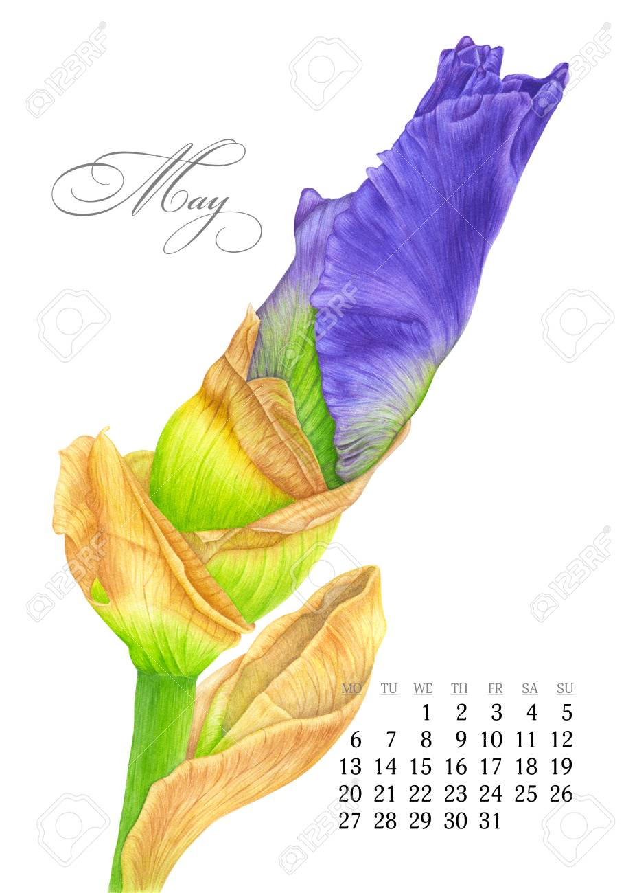 graphic relating to Watercolor Printable identified as Stylish printable calendar 2019. May possibly. Watercolor iris. Botanical..