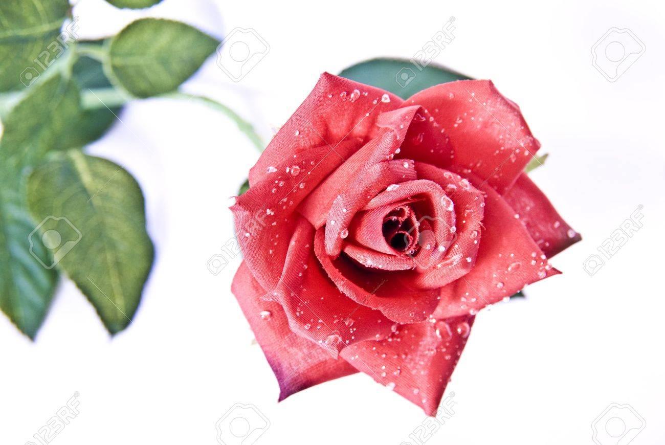 Eine Rose Bedeutet Manchmal Mehr Als Viele Worte. Und Bricht ...