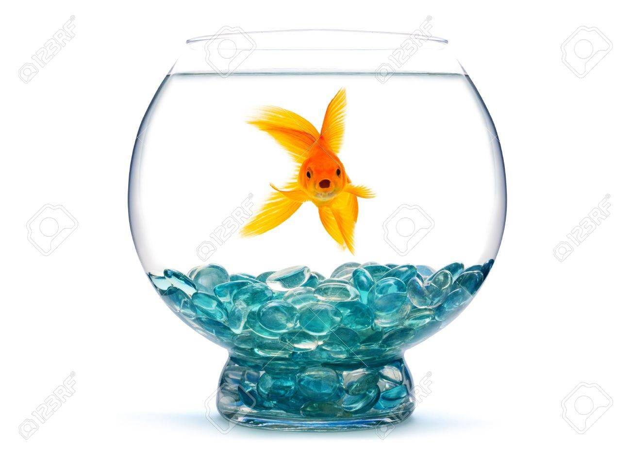 Goldfish in aquarium on white background Stock Photo - 5709473