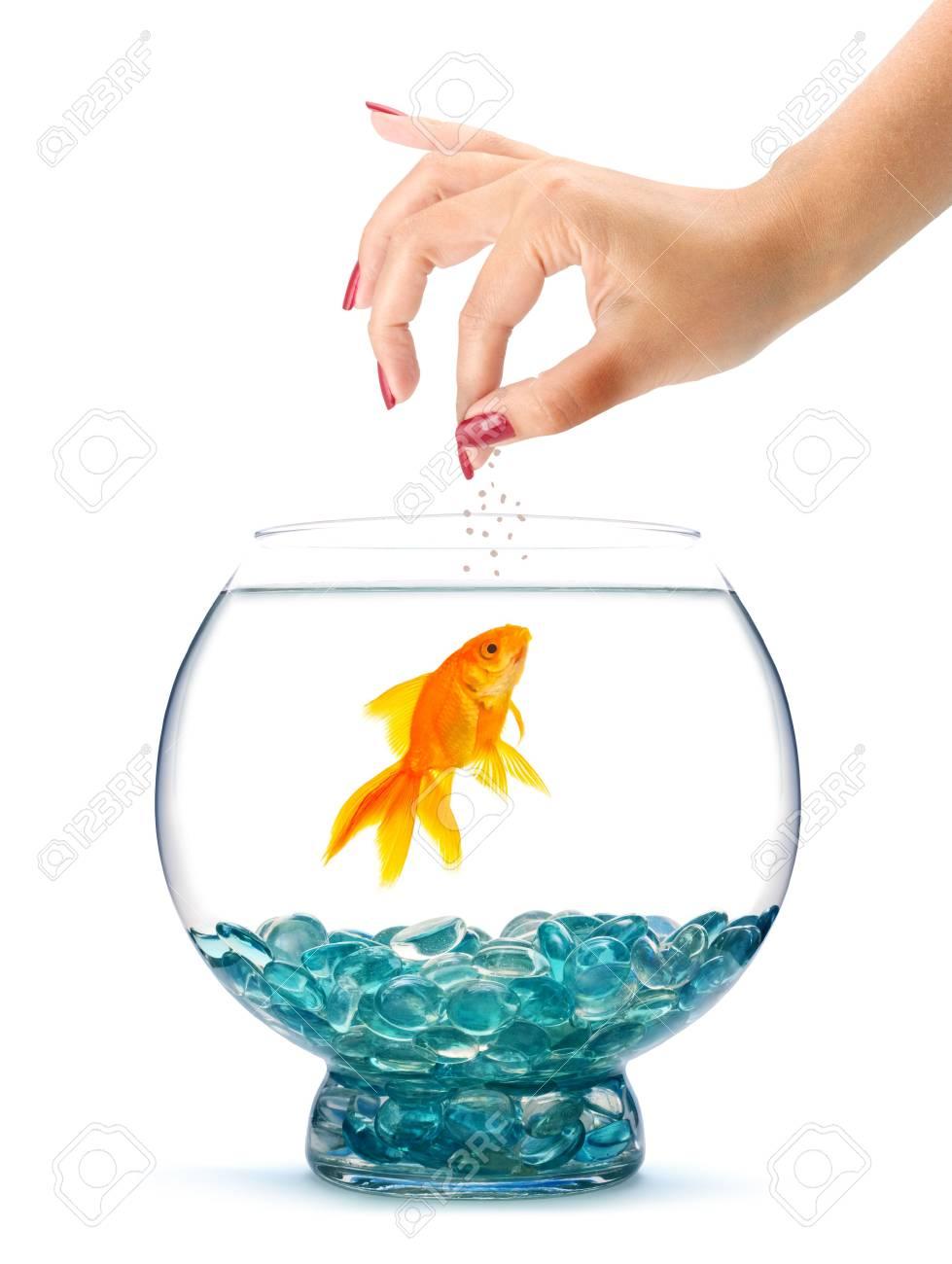 Goldfish in aquarium  isolated on a white background Stock Photo - 5771820