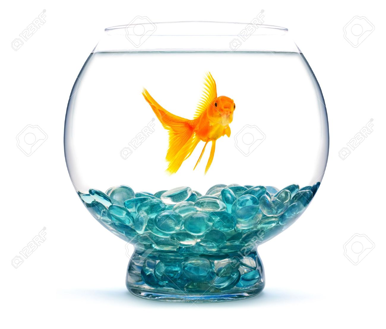 Gold fish in aquarium on a white background Stock Photo - 6496275