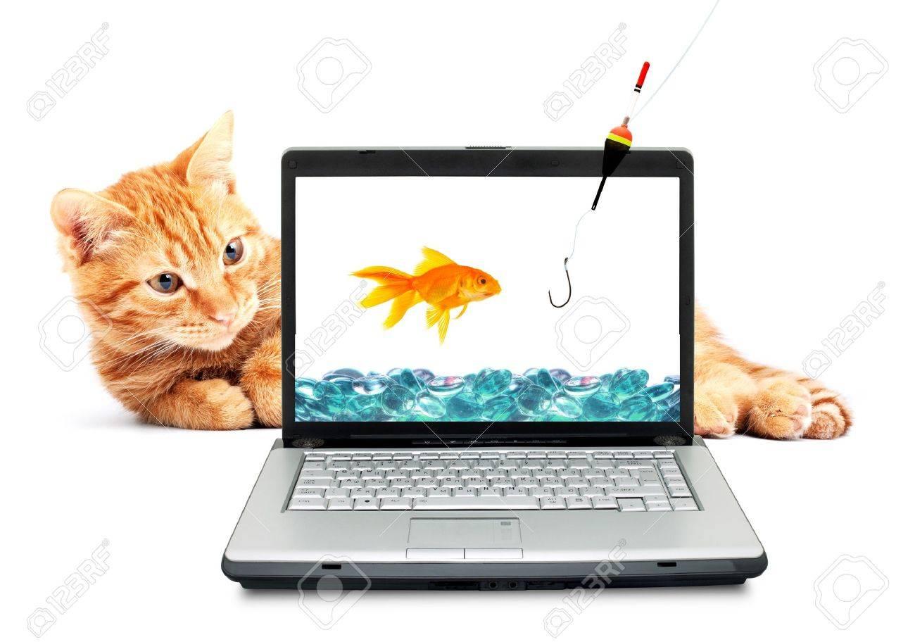 Goldfish, cat, laptop isolated on white background Stock Photo - 6979285
