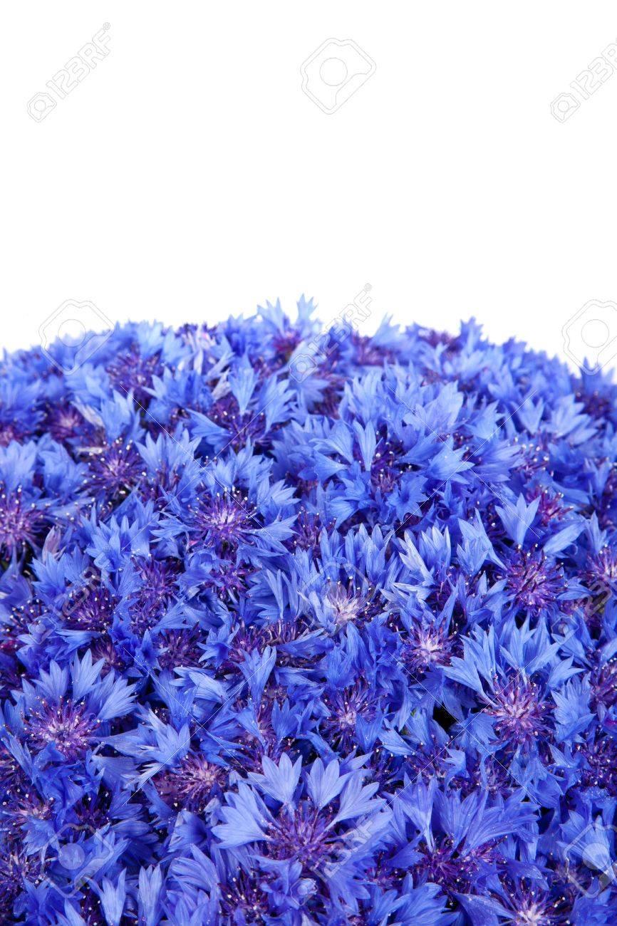 Beautiful spring flowers blue cornflower on background blue flowers beautiful spring flowers blue cornflower on background blue flowers pattern stok fotoraf 14050970 mightylinksfo