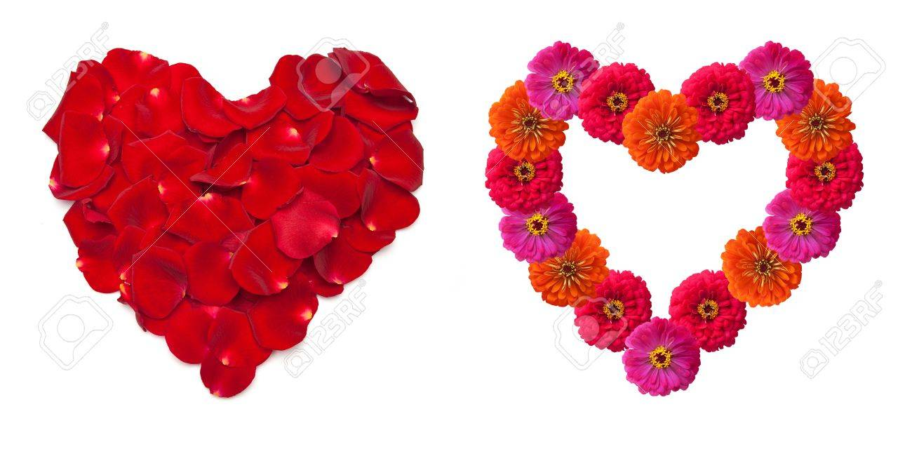 Heart shape made out of rose petals isolated on white Stock Photo - 14051446