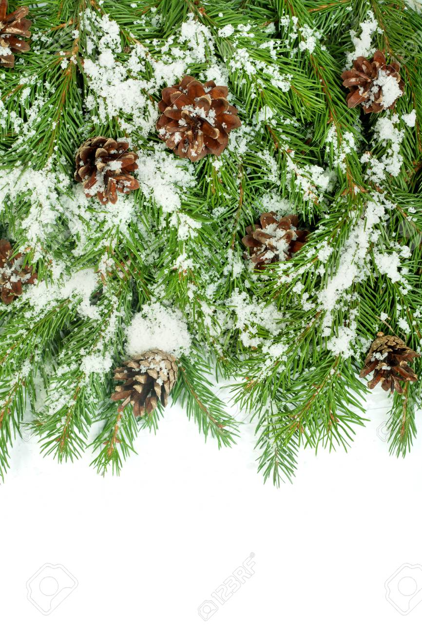 Christmas background with snow, and cones isolated on white Stock Photo - 15548727