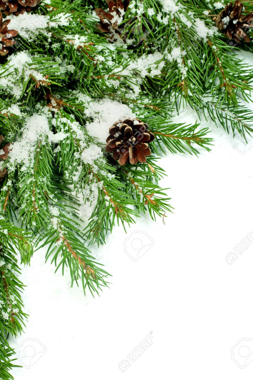 Christmas background with snow, and cones isolated on white Stock Photo - 15548682