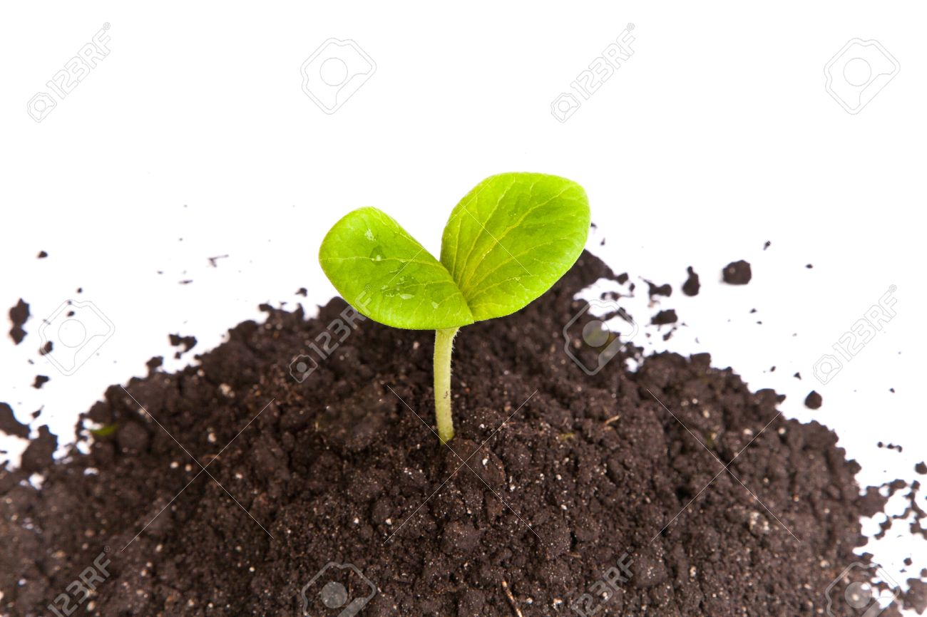 Heap dirt with a green plant sprout isolated on white background Stock Photo - 15564827