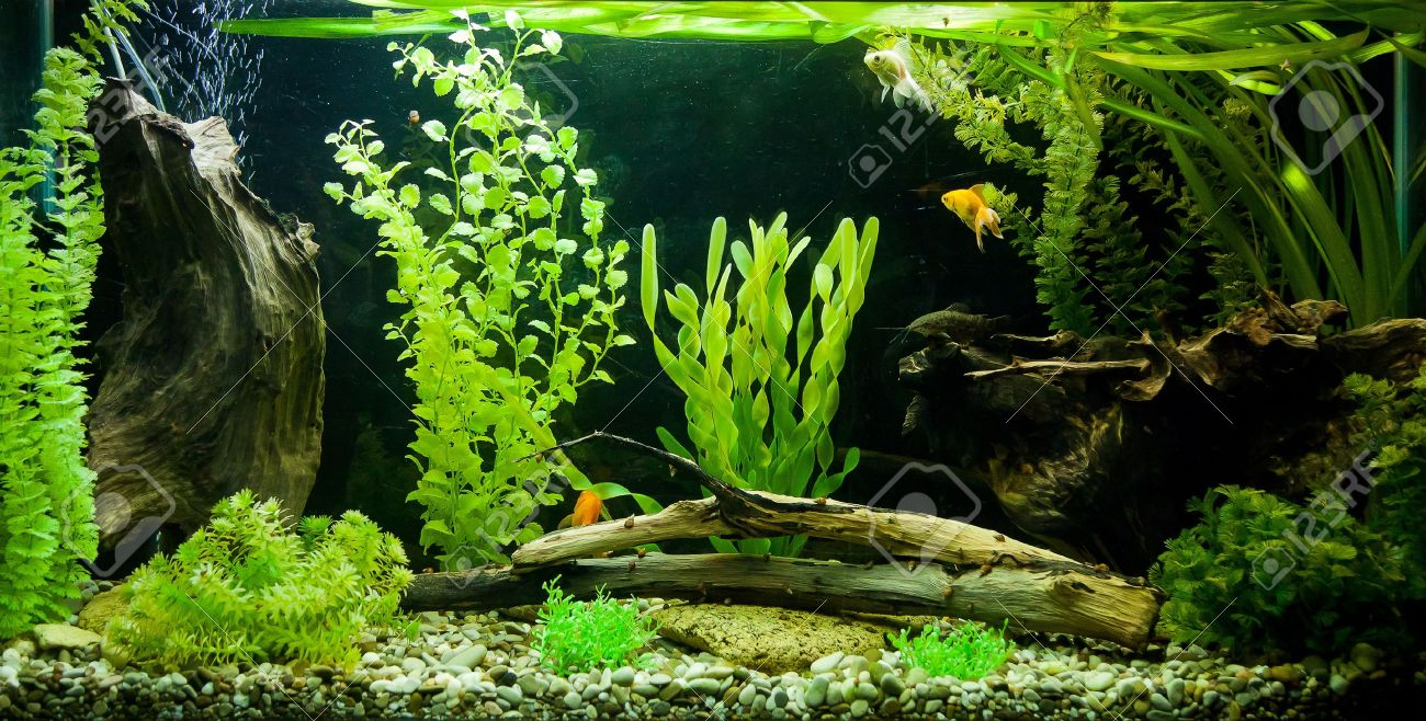 photograph about Aquarium Backgrounds Printable named Aquarium Heritage Inventory Illustrations or photos And Visuals - 123RF