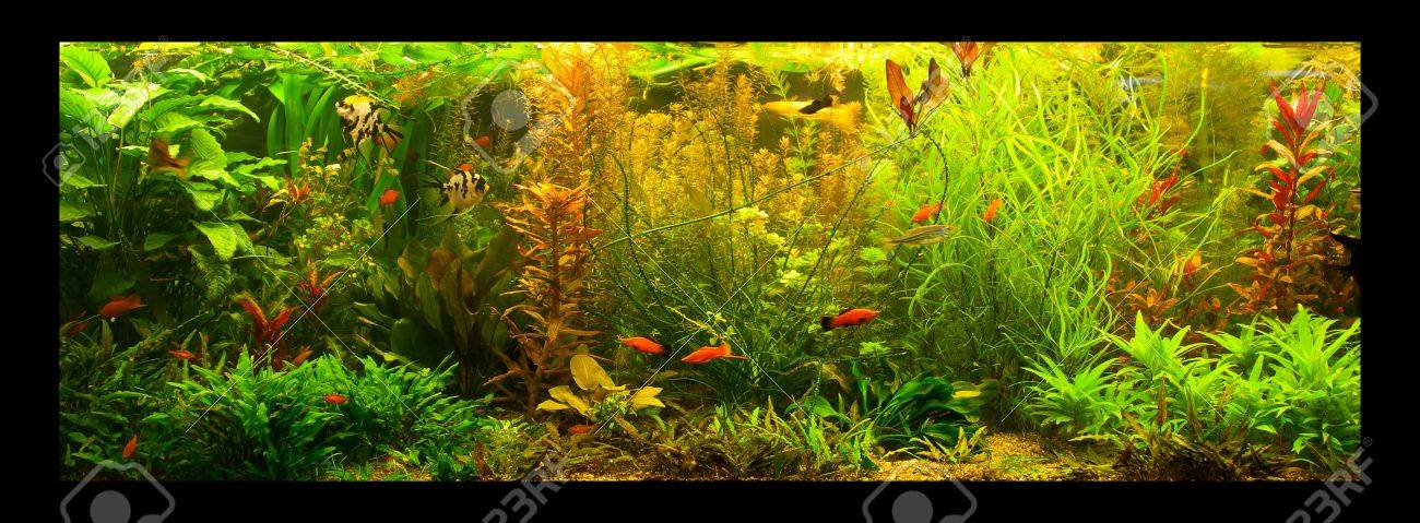 A green beautiful planted tropical freshwater aquarium with fishes Stock Photo - 15933580