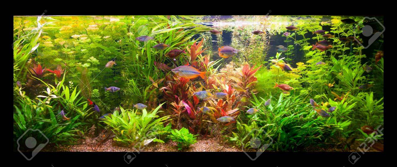 A green beautiful planted tropical freshwater aquarium with fishes Stock Photo - 15933581
