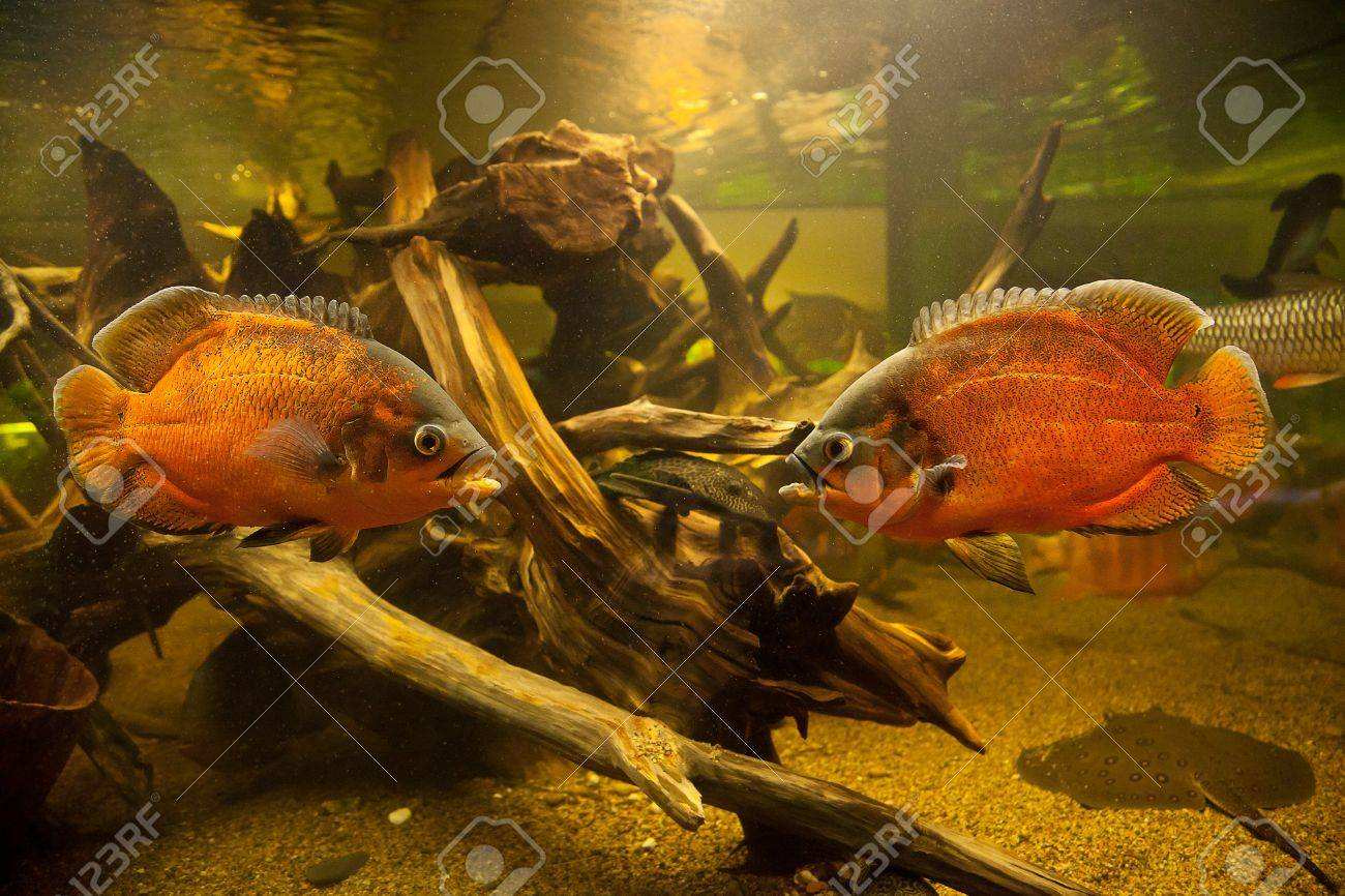 A green beautiful planted tropical freshwater aquarium with fishes Stock Photo - 15933488