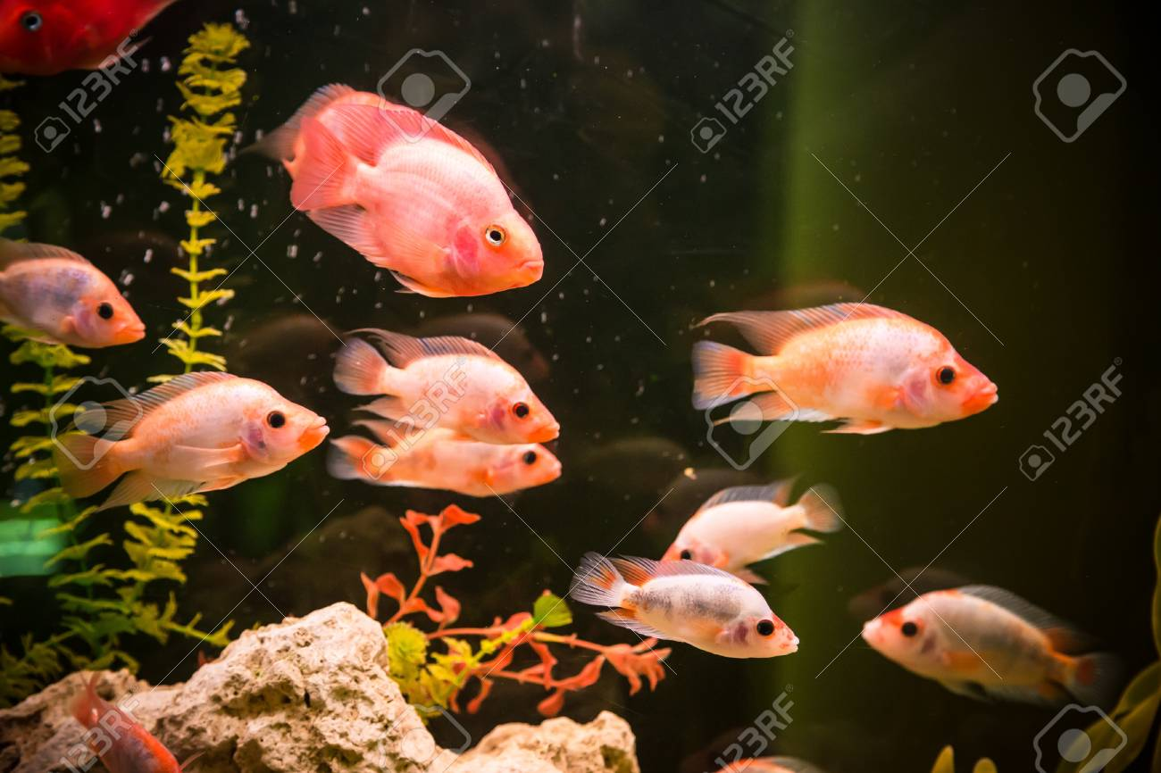 A green beautiful planted tropical freshwater aquarium with fishes Stock Photo - 17634660