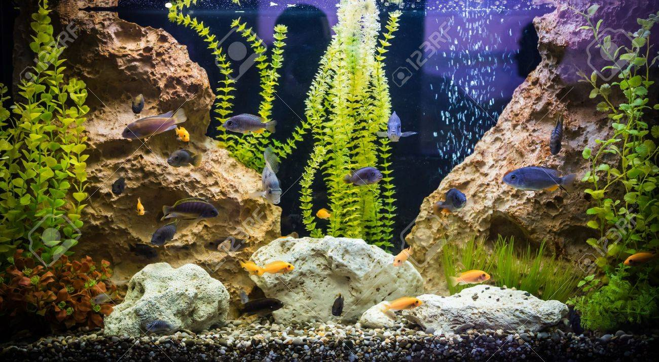 A green beautiful planted tropical freshwater aquarium with fishes Stock Photo - 17634954