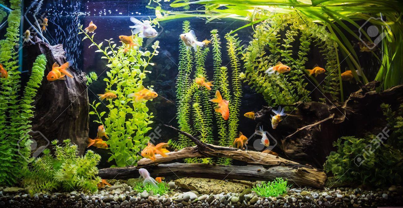 décoration aquarium exotique