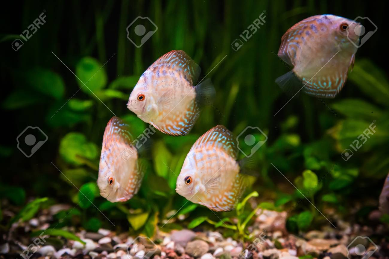 A green beautiful planted tropical freshwater aquarium with fishes Stock Photo - 17634596
