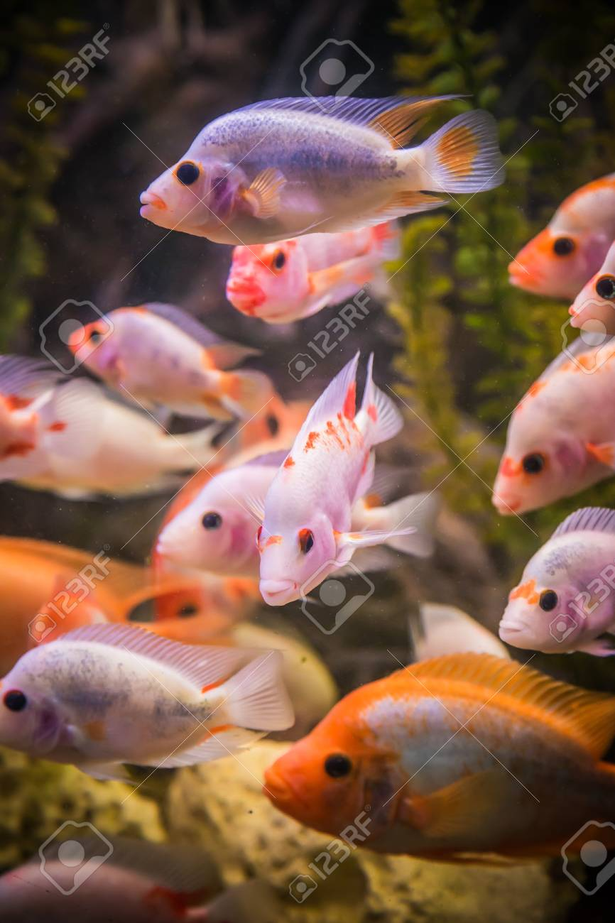A green beautiful planted tropical freshwater aquarium with fishes Stock Photo - 17634621
