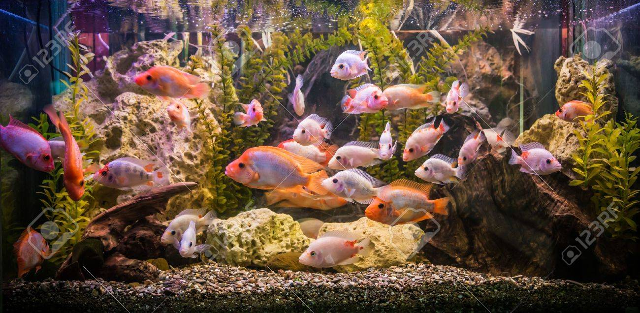 A green beautiful planted tropical freshwater aquarium with fishes Stock Photo - 17634963