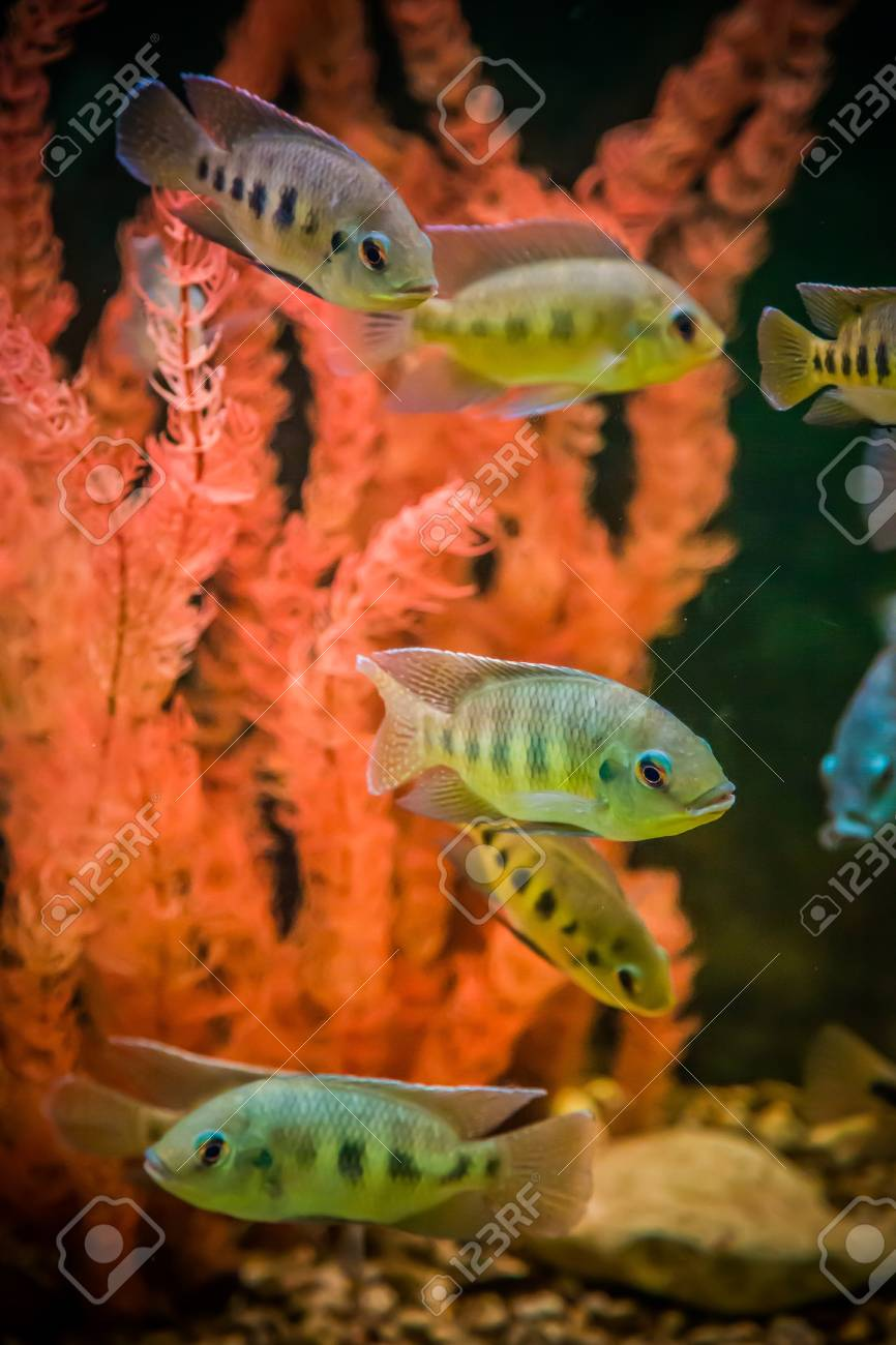 A green beautiful planted tropical freshwater aquarium with fishes Stock Photo - 17634684