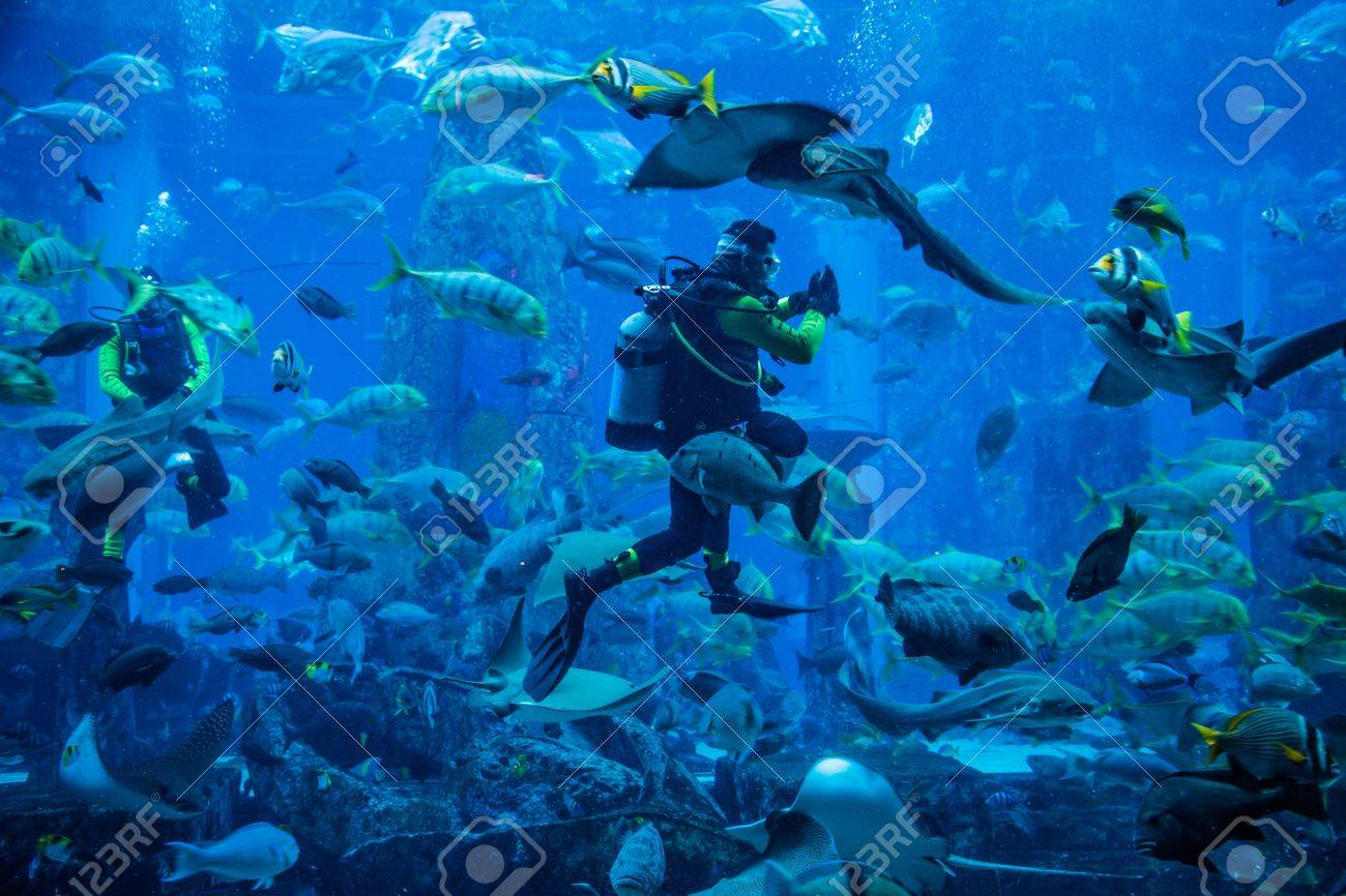 Fish aquarium in uae - Dubai Uae November 14 Huge Aquarium In A Hotel Atlantis On The Palm