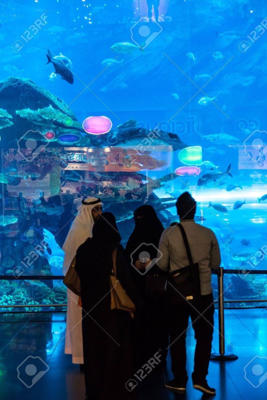 Fish aquarium in uae - Dubai Uae November 14 Aquarium In Dubai Mall World S Largest Shopping Mall