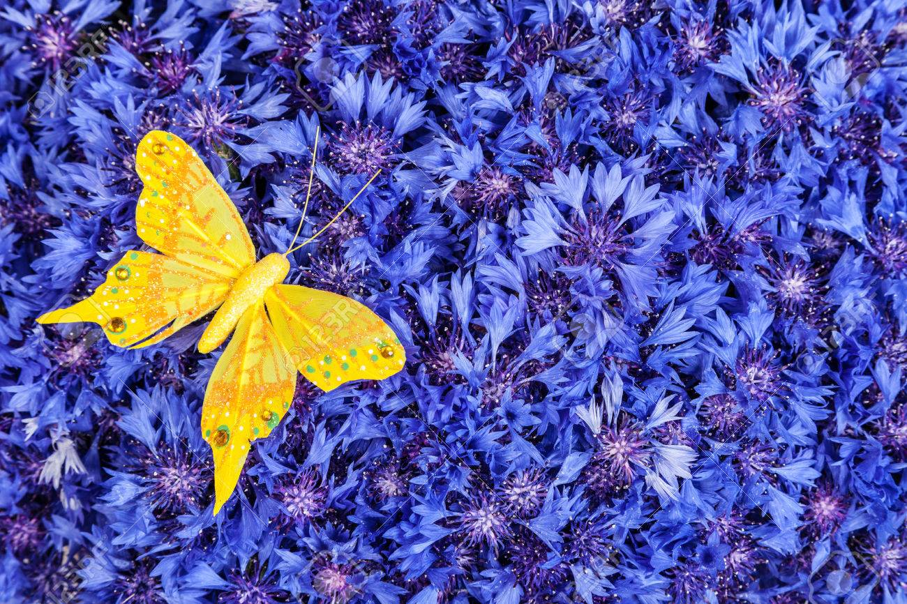 Spring Flowers Blue Cornflower With Yellow Butterfly Wallpaper