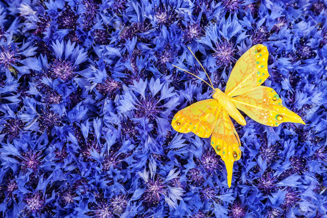 Amazing Wallpaper Butterfly Spring - 26054961-spring-flowers-blue-cornflower-with-yellow-butterfly-wallpaper-backdrop  Collection_76818.jpg