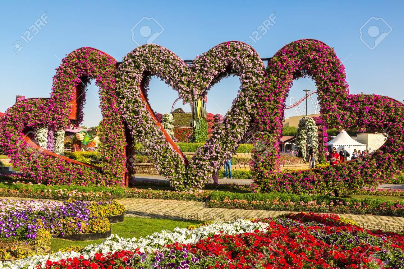DUBAI, UAE - NOVEMBER 24 : Dubai Miracle Garden With Over 45.. Stock ...