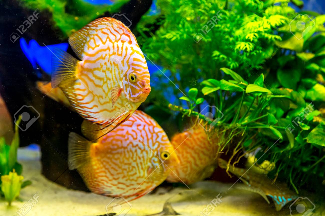 A Green Beautiful Planted Tropical Freshwater Aquarium With Colorful ...