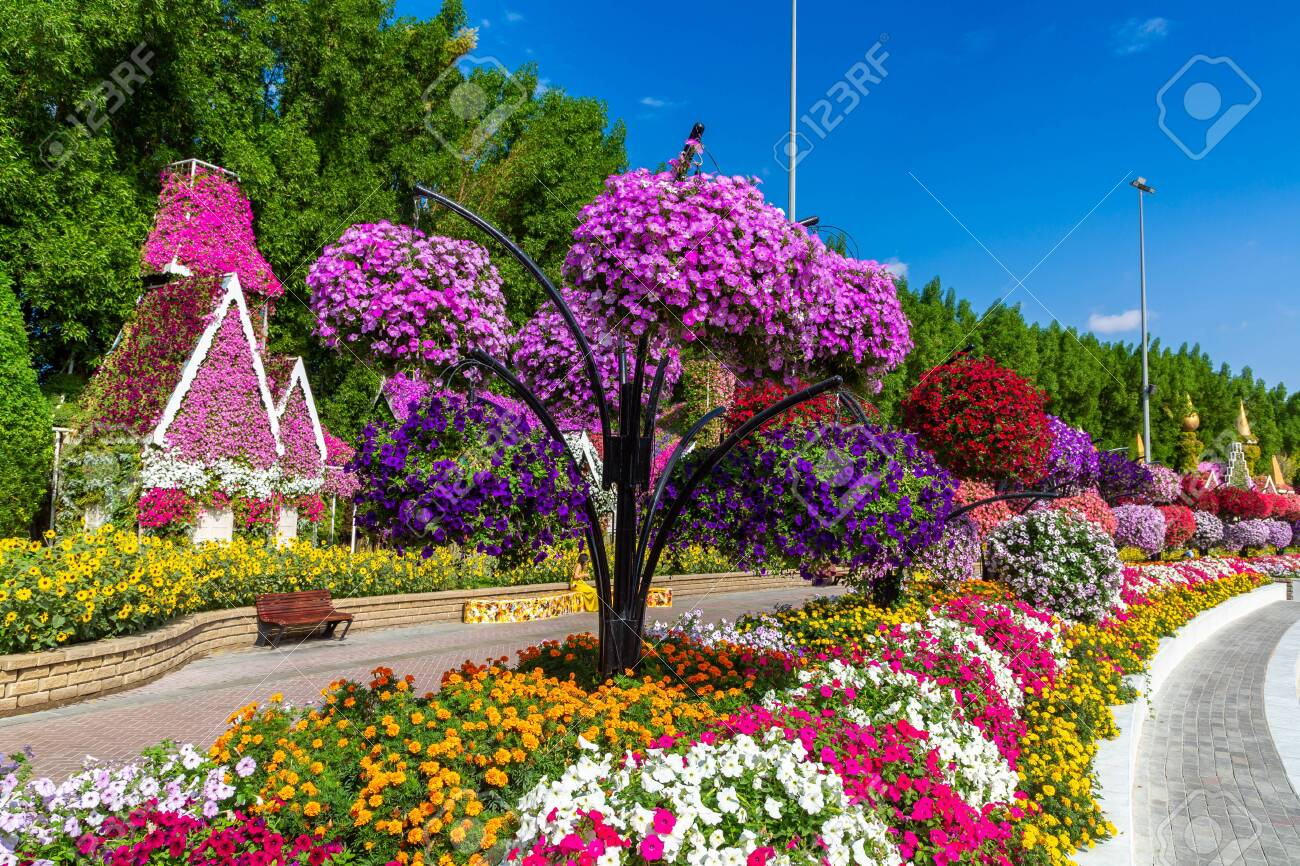 Dubai United Arab Emirates March 29 2020 Dubai Miracle Garden Stock Photo Picture And Royalty Free Image Image 145729509