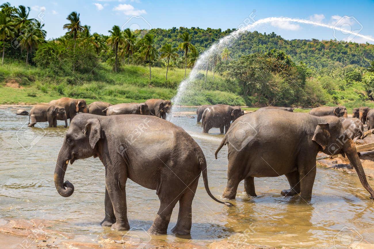 Herd of elephants in Sri Lanka in a summer day - 173329216
