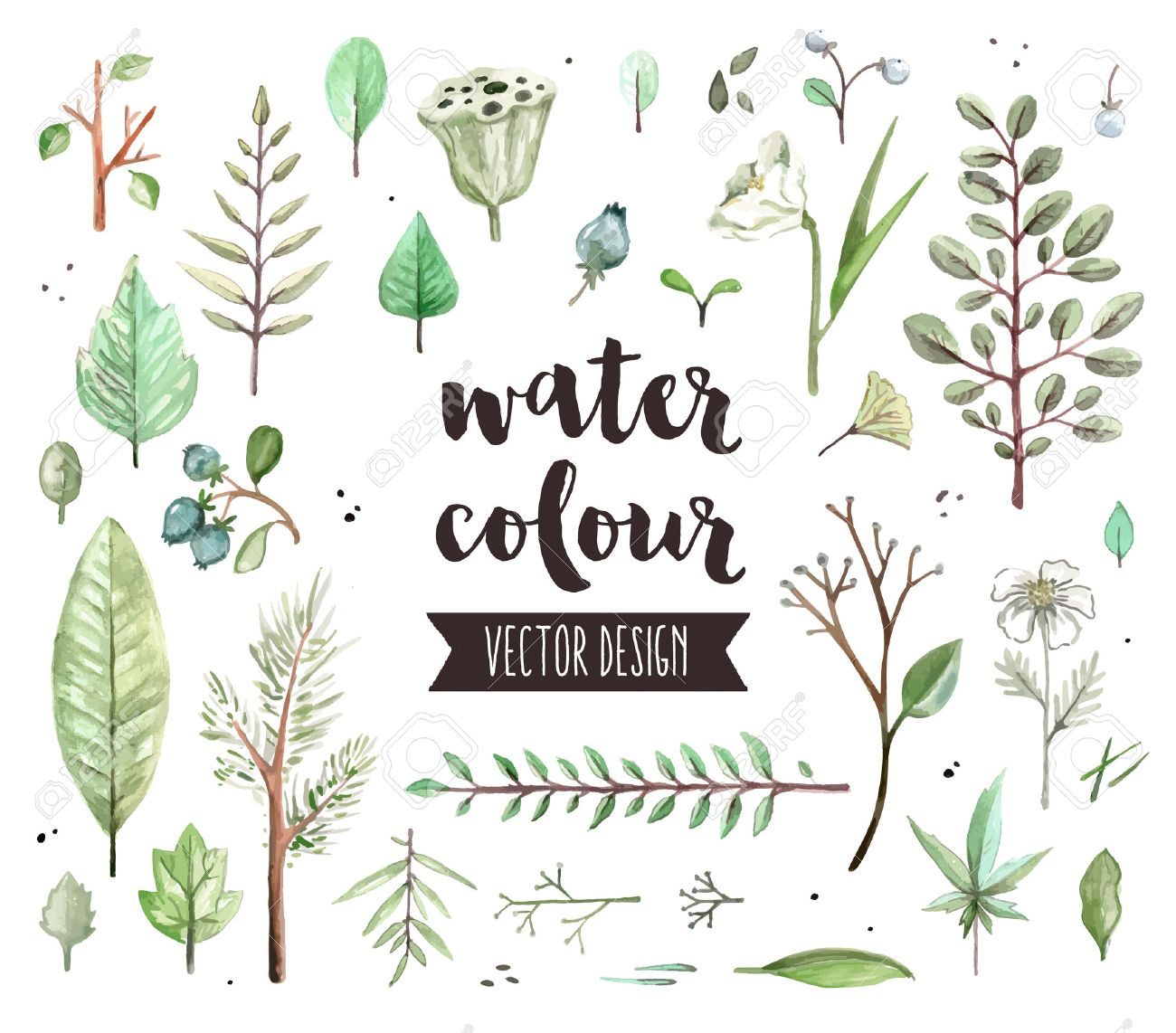 Premium quality watercolor icons set of various plant leaves, wild trees branch. realistic decoration with text lettering. Flat lay watercolour objects isolated on white background. Stock Vector - 53856859