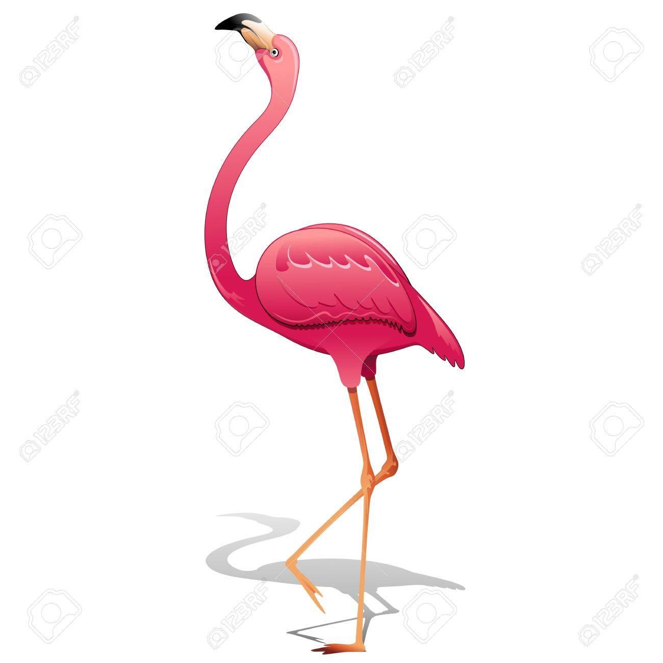 Pink Flamingo Stock Vector - 19136430