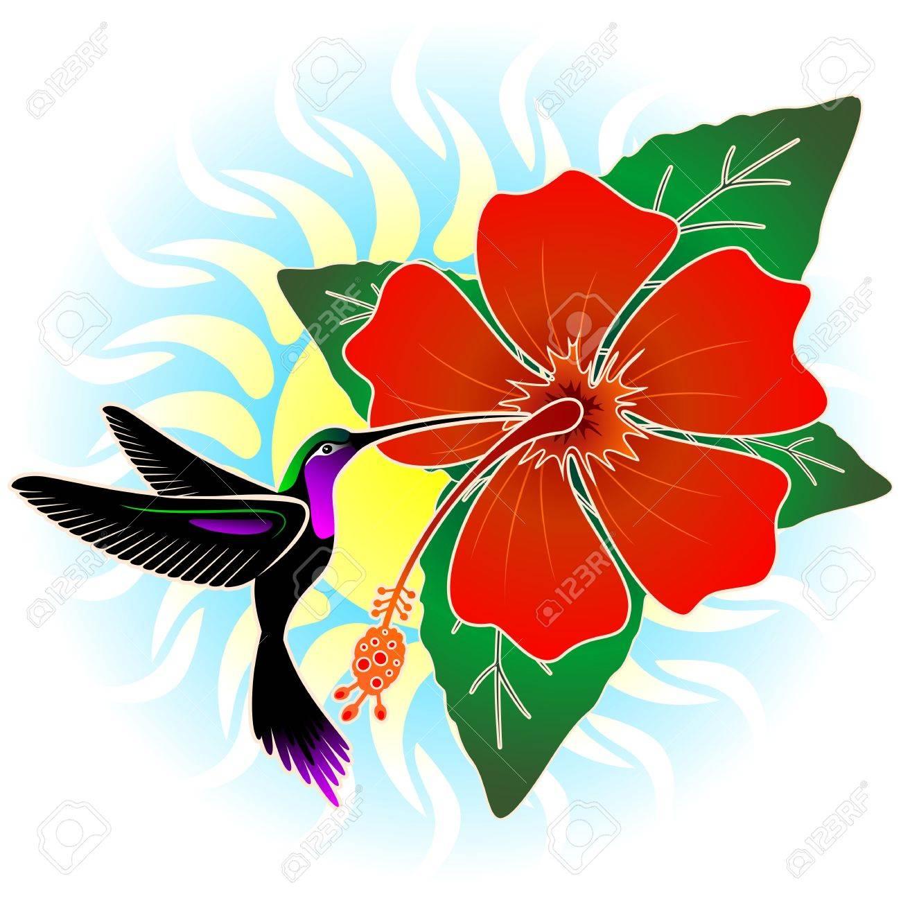 colibri et rouge hibiscus clip art libres de droits , vecteurs et