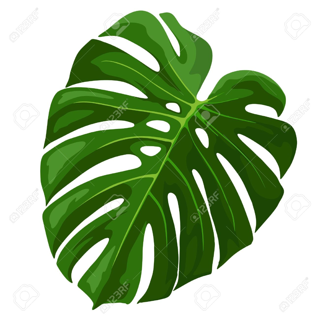 Tropical Leaf Monstera Plant Isolated On White Royalty Free Cliparts Vectors And Stock Illustration Image 59196169 Here you can explore hq monstera leaf transparent illustrations, icons and clipart with filter setting polish your personal project or design with these monstera leaf transparent png images, make it. tropical leaf monstera plant isolated on white