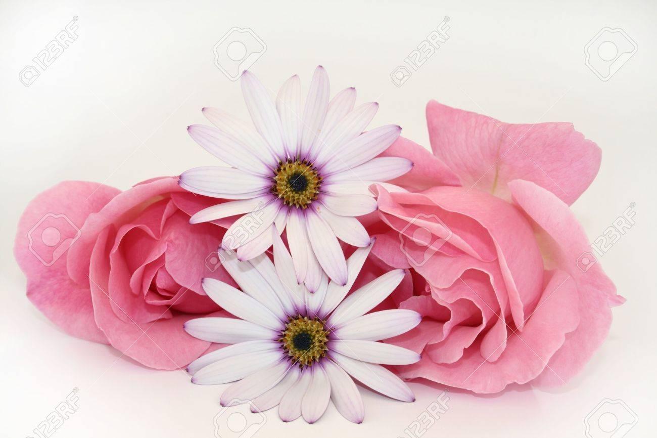 Two daisies iPad Wallpaper Download iPhone Wallpapers iPad
