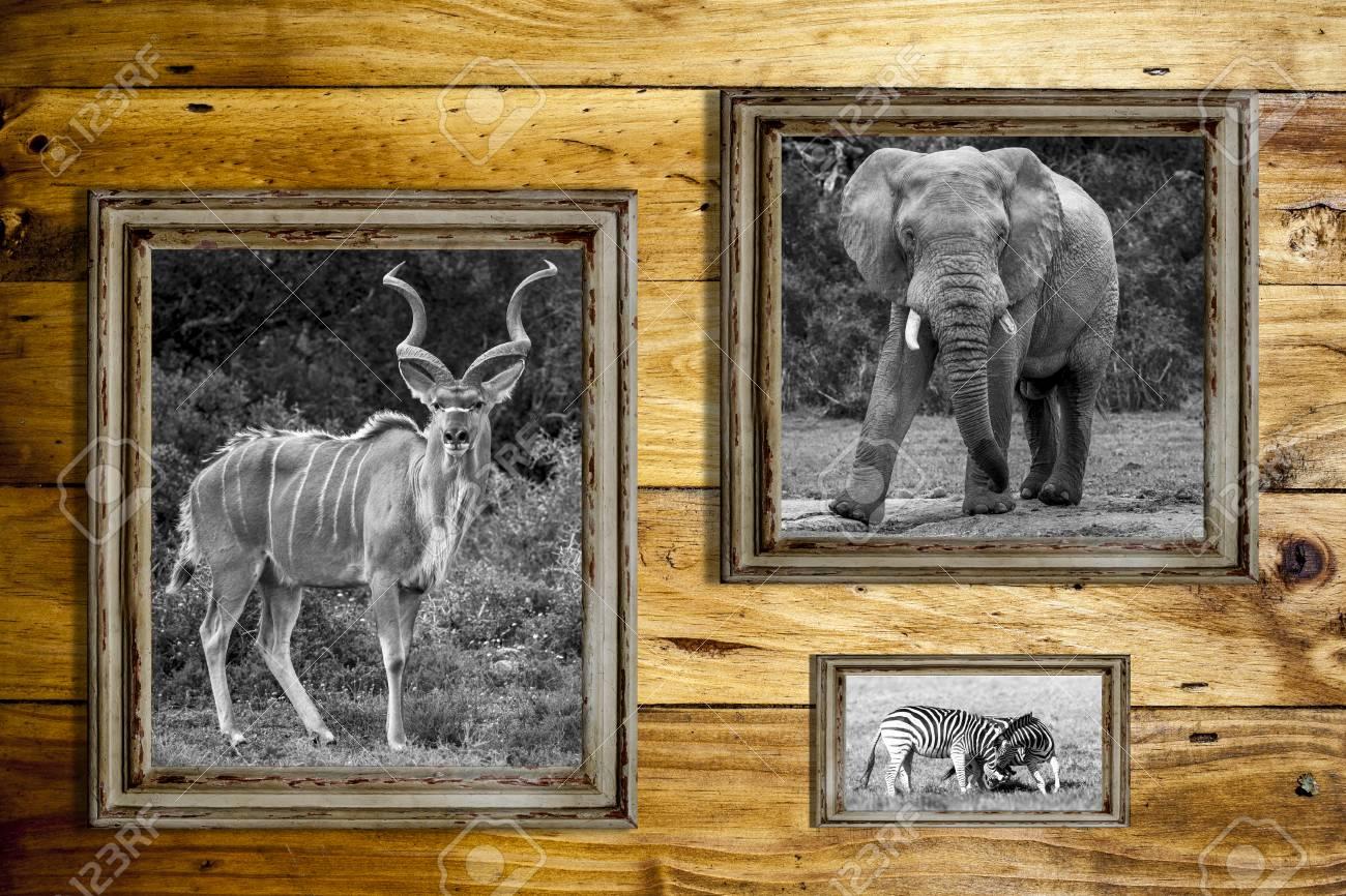 Drei Leere Bilderrahmen Mit Schwarz-Weiß-Bilder Von Einem Elefanten ...