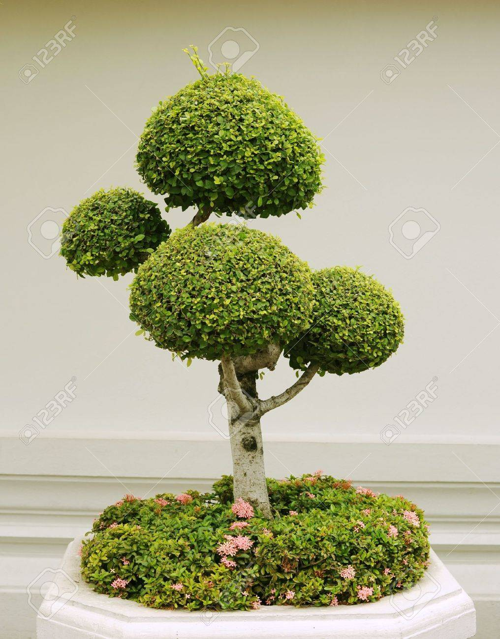 pot model decor models max tree decorative cgtrader obj plant