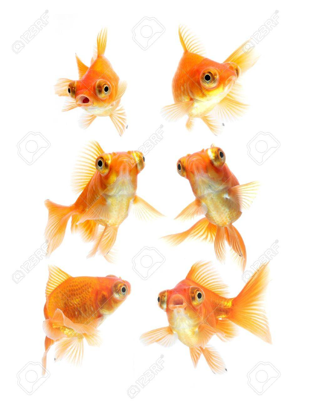 goldfish isolated on white background Stock Photo - 11910337