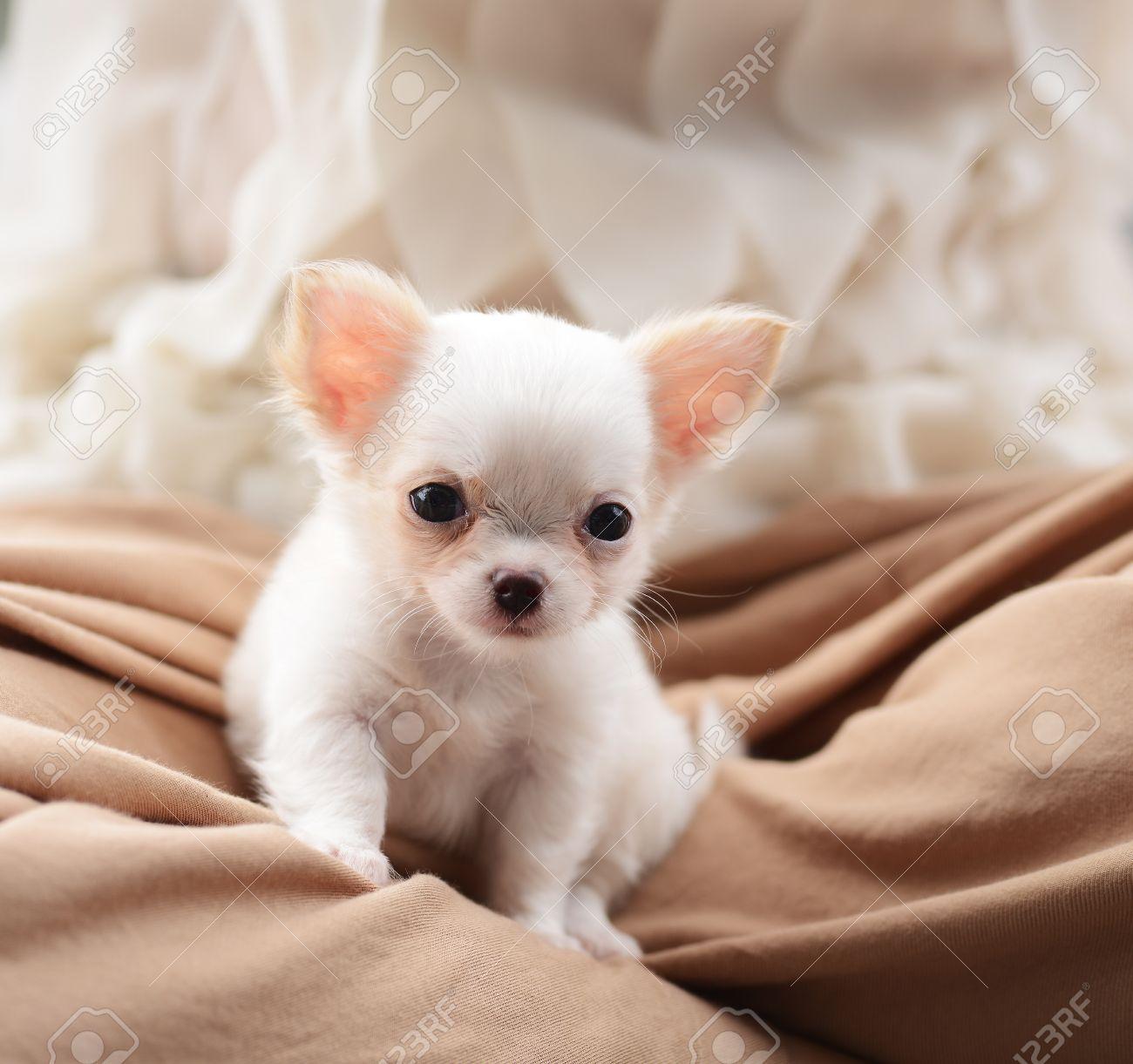 唸る 子犬