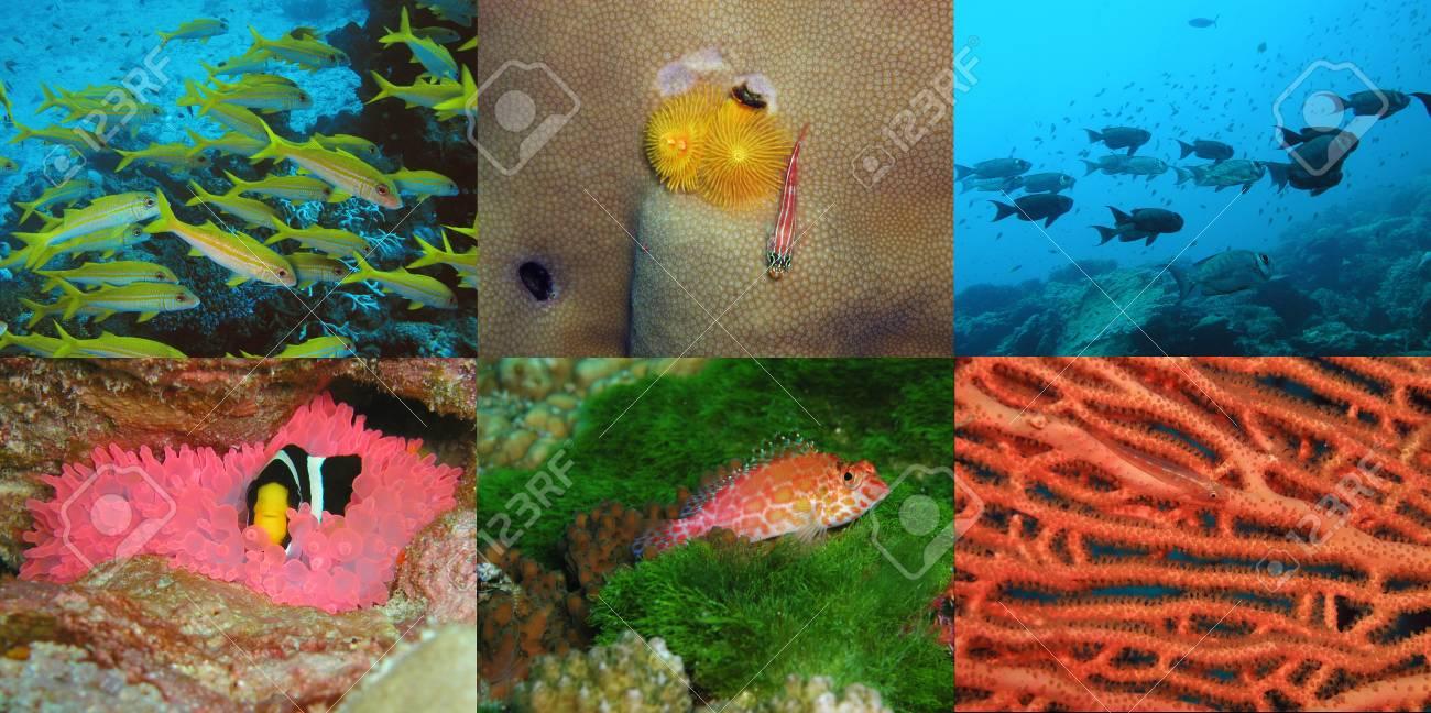 underwater photo theme Stock Photo - 16452878