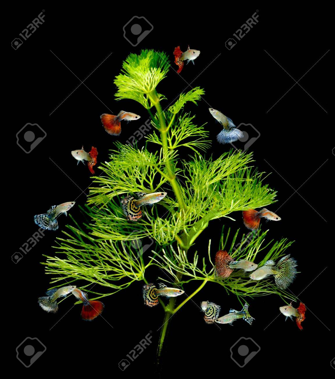 Christmas Tree Underwater Concept With Guppy Fish Ornament On